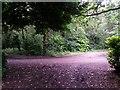 SZ0793 : Talbot Village: footpath N12 crosses footpath N11 by Chris Downer