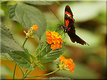 SJ4170 : Butterfly Journey at Chester Zoo by David Dixon