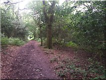 SZ0793 : Talbot Village: footpath N13 becomes unfollowable but N14 continues by Chris Downer
