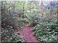 SZ0794 : Talbot Village: this path crosses the route of footpath N13 by Chris Downer