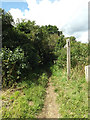 TL9484 : Peddars Way Footpath to High Bridgham Road by Adrian Cable