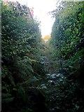 SZ0795 : East Howe: overgrowing undergrowth on footpath U40 by Chris Downer