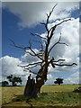 SO8732 : A skeletal dead oak tree by Philip Halling