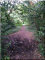 SZ0895 : Redhill: muddy patch on bridleway O16 by Chris Downer