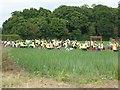SO8645 : Seasonal workers on farmland by Philip Halling