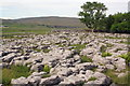 SD7577 : Limestone pavement at Philpin Sleights by Roger Templeman
