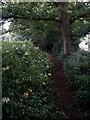 SZ1095 : Muscliff: little yellow flowers alongside footpath M17 by Chris Downer