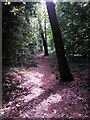 SZ0794 : Talbot Village: footpath N10 goes through the woods by Chris Downer