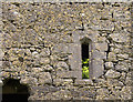 N0626 : Castles of Leinster: Clonlyon, Co. Offaly (4) by Mike Searle