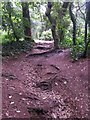 SZ0794 : Talbot Village: footpath N16 is a route of roots by Chris Downer