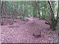 SZ0794 : Talbot Village: tree stump on footpath N37 by Chris Downer
