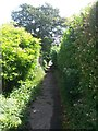 SZ0696 : West Howe: quite rural looking on footpath E15 by Chris Downer