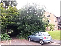 SZ0995 : Redhill: the dead end of Portswood Drive by Chris Downer