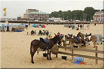SY6879 : Donkeys on Weymouth beach by Richard Croft