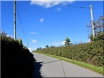 SO6031 : Wire over a Brockhampton lane by Jaggery
