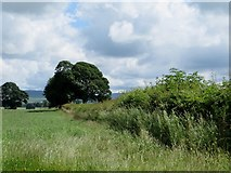 SD6074 : Hedgerow near Tunstall by Philip Platt