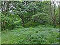 NN3315 : Woodland by the West Highland Way by John Allan