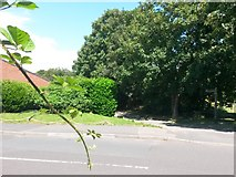 SZ0995 : Muscliff: footpath M15 from Granby Road by Chris Downer