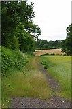 TQ2156 : Path by Little Hurst Wood by Glyn Baker