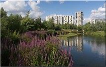 TQ3784 : Waterglades wetlands, East Village, Queen Elizabeth Olympic Park by Julian Osley