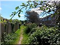 SZ1095 : Muscliff: bramble overarching footpath K24 by Chris Downer