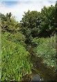 SU1515 : Channel of the Avon near Burgate by Derek Harper