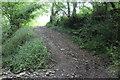 ST1799 : Track in Cwm Crach, Argoed-uchaf by M J Roscoe