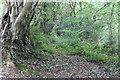 ST1799 : Footpath, Cwm Crach by M J Roscoe