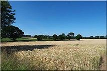 NZ5414 : Looking toward Church Lane by Bob Harvey
