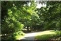 SU1716 : Lane near Woodgreen by Derek Harper