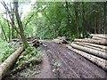 SJ8243 : Logpiles in Springpool Wood by Jonathan Hutchins