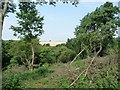 SE3742 : Fenced and cleared area, Hetchell Wood by Christine Johnstone