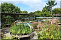 NX7560 : Threave Garden Plant Centre by Billy McCrorie