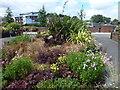 TF4609 : Near Freedom Bridge - Wisbech in Bloom 2016 by Richard Humphrey