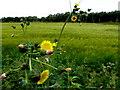 H4275 : Weeds, Lisnagirr by Kenneth  Allen