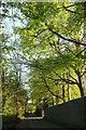 ST5371 : Longwood Lane by Derek Harper
