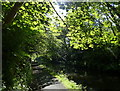 NS8878 : Tree lined towpath of the Union Canal by Mat Fascione