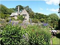 SX9050 : The Rill Garden at Coleton Fishacre by Derek Voller