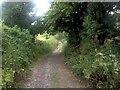 TQ5859 : Pilgrims Way, near Wrotham by Chris Whippet