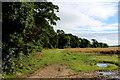 SE5175 : Line of Trees beside Elphin Beck by Chris Heaton