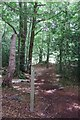 TQ5991 : Footpath through Warley Gap by Glyn Baker