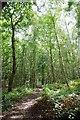 TQ5990 : Secondary Woodland in Warley Gap by Glyn Baker