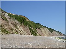 SY2589 : Haven Cliff, east of Seaton by David Smith