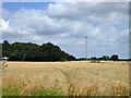 TL5357 : Field of barley by Robin Webster
