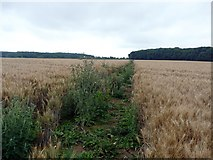 SK7259 : Footpath through a wheatfield by Graham Hogg