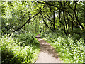 NY3858 : Path in Kingmoor South Nature Reserve by David Dixon
