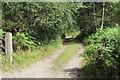 SO1701 : Track to Ty'r-graig by M J Roscoe