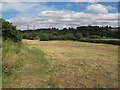 SE2336 : Hay meadow at Rodley nature reserve by Stephen Craven