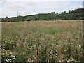 SE2336 : Seed crops at Rodley nature reserve by Stephen Craven