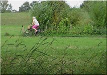 SE5853 : Clifton Ings cycle path, York by Paul Harrop